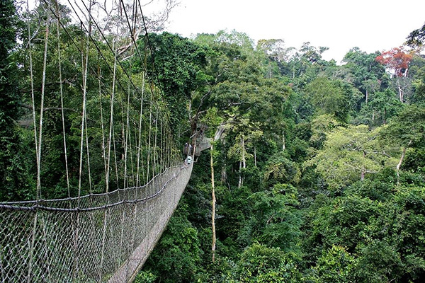 taman_negara_canopy_walkway