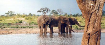 sloni-v-africe