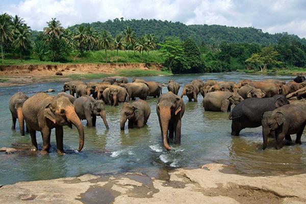 sri-lanka-sloni