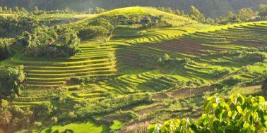 terraced_fields_sa_pa_vietnam