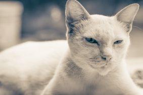 adorable-animal-animal-photography-363088